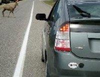 Plug in Prius with deer