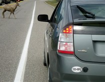 plug in prius and goat